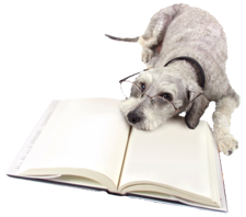 Image of a dog reading a book.